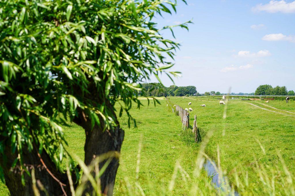 Alphen aan den Rijn  Landgoed Verboom Kavels – Foto 10